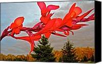 Canna Lilies Canvas Prints - Canopy of Color Canvas Print by Randy Rosenberger