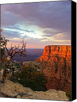 Sand Photo Special Promotions - Canyon Rim Tree Canvas Print by Heidi Smith