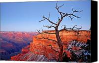 National Parks Canvas Prints - Canyon Tree Canvas Print by Peter Tellone