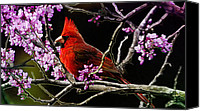 Red Cardinal Canvas Prints - Cardinal in Bloom Canvas Print by Bill Tiepelman