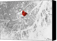 Flora Drawings Canvas Prints - Cardinal In Winter Canvas Print by Ellen Henneke