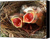 Cardinals. Wildlife. Nature. Photography Canvas Prints - Cardinal Twins - Open Wide Canvas Print by Al Powell Photography USA