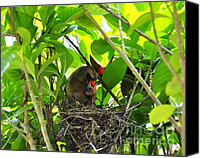 Cardinals. Wildlife. Nature. Photography Canvas Prints - Cardinals Caterpillars Canvas Print by Al Powell Photography USA