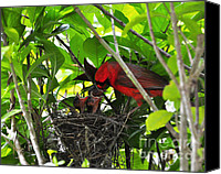 Cardinals. Wildlife. Nature. Photography Canvas Prints - Cardinals Chowtime Canvas Print by Al Powell Photography USA