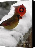 Cardinals. Wildlife. Nature. Photography Canvas Prints - Cardinals with Seed Canvas Print by Jennifer Wosmansky