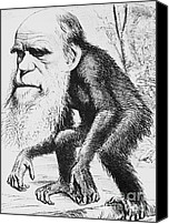 Unnatural Canvas Prints - Caricature Of Charles Darwin, 1871 Canvas Print by Science Source