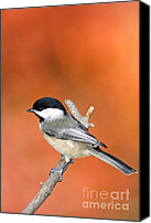Indiana Autumn Canvas Prints - Carolina Chickadee - D007812 Canvas Print by Daniel Dempster