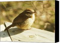Carolina Wren Canvas Prints - Carolina Wren Canvas Print by Amy Tyler