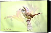 Carolina Wren Canvas Prints - Carolina Wren in Early Spring Canvas Print by Bonnie Barry