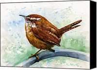 Wren Canvas Prints - Carolina Wren Large Canvas Print by John D Benson