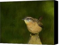 Carolina Wren Canvas Prints - Carolina Wren Canvas Print by Steven Richardson