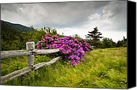 Fuchsia Canvas Prints - Carvers Gap Roan Mountain State Park Highlands TN NC Canvas Print by Dave Allen