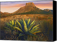 Casa Grande Canvas Prints - Casa Grande Butte With Agave Canvas Print by Tim Fitzharris