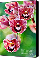 Red Flowers Canvas Prints - Cascading Miniature Orchids Canvas Print by Kaye Menner