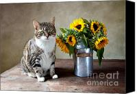 Oil Cat  Canvas Prints - Cat and Sunflowers Canvas Print by Nailia Schwarz