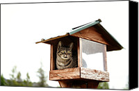 Bird On Feeder Canvas Prints - Cat In Bird Feeder Canvas Print by Carlina Teteris