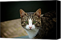 Animal Head Shot Canvas Prints - Cat Canvas Print by Odd Jeppesen