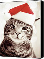 Animal Portrait Canvas Prints - Cat Wearing Christmas Hat Canvas Print by Michelle McMahon