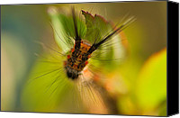 Bugs Canvas Prints - Caterpillar Canvas Print by Arj Munoz