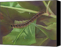 Insects Pastels Canvas Prints - Caterpillar Canvas Print by Sharon Allen