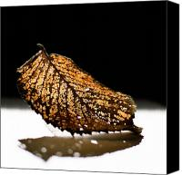 Eaten Canvas Prints - Caterpillars Sculpture Canvas Print by Tim Nichols