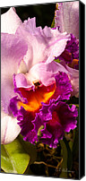 Cattleya Canvas Prints - Cattleya III Canvas Print by Christopher Holmes