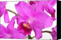 Cattleya Canvas Prints - Cattleya Orchid Canvas Print by Lynn Berreitter