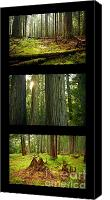 Cedar Canvas Prints - Cedar Forest Trio Canvas Print by Idaho Scenic Images Linda Lantzy
