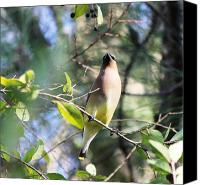 Signed Digital Art Canvas Prints - Cedar Waxwing 5696-II Canvas Print by Suzanne  McClain