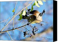 Signed Digital Art Canvas Prints - Cedar Waxwing 5714-I Canvas Print by Suzanne  McClain