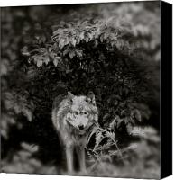 Wolf Photo Shot Canvas Prints - Center Of The Forest Canvas Print by Debra     Vatalaro