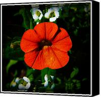 Vinca Flowers Canvas Prints - Center Stage Canvas Print by Leslie Revels Andrews