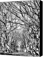 Nyc Canvas Prints - Central Park Trees bw Canvas Print by John Rizzuto