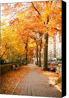 Fall Leaves Canvas Prints - Central Park West Canvas Print by Ariane Moshayedi