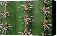 Cereus Canvas Prints - Cereus Cactus Spines Up Close Canvas Print by Darlyne A. Murawski