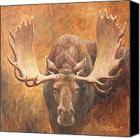 Bull Moose Canvas Prints - Challenge Canvas Print by Crista Forest