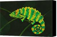 Chameleon Canvas Prints - Chameleon Canvas Print by Anastasiya Malakhova