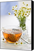 Serve Photo Canvas Prints - Chamomile tea Canvas Print by Elena Elisseeva