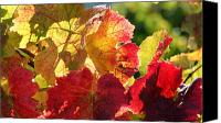 Grapeleaves Canvas Prints - Changing Colors Canvas Print by Melanie Rainey