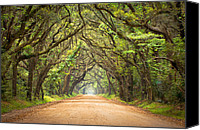 Green Canvas Prints - Charleston SC Edisto Island - Botany Bay Road Canvas Print by Dave Allen