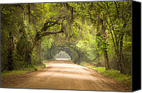 Lush Vegetation Canvas Prints - Charleston SC Edisto Island Dirt Road - The Deep South Canvas Print by Dave Allen