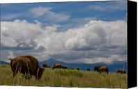 Bison Canvas Prints - Charlie Russel Clouds Canvas Print by Katie LaSalle-Lowery