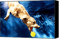 Diving Dog Canvas Prints - Chase Canvas Print by Jill Reger