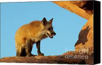 North American Wildlife Canvas Prints - Checking My Shadow Canvas Print by Sandra Bronstein