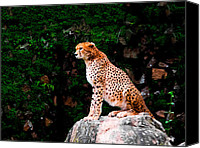 Cheetah Painting Canvas Prints - Cheetah Canvas Print by Hakon Soreide