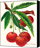 Fine Art - Still Lifes Canvas Prints - Cherries on a Branch Canvas Print by Enzie Shahmiri