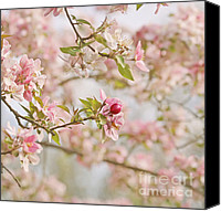 Pink Flower Branch Canvas Prints - Cherry Blossom Delight Canvas Print by Kim Hojnacki