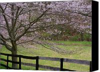Fences Canvas Prints - Cherry Blossom Fence Canvas Print by Joyce L Kimble