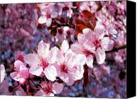 Pink Flower Branch Canvas Prints - Cherry Blossom Canvas Print by Molly McPherson