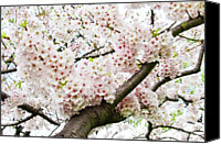 Flower Photo Canvas Prints - Cherry Blossom Canvas Print by Sky Noir Photography by Bill Dickinson